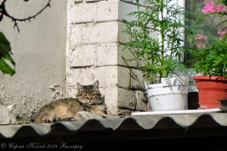 Хорошая примета с утра, кот на месте, значит день будет удачным!